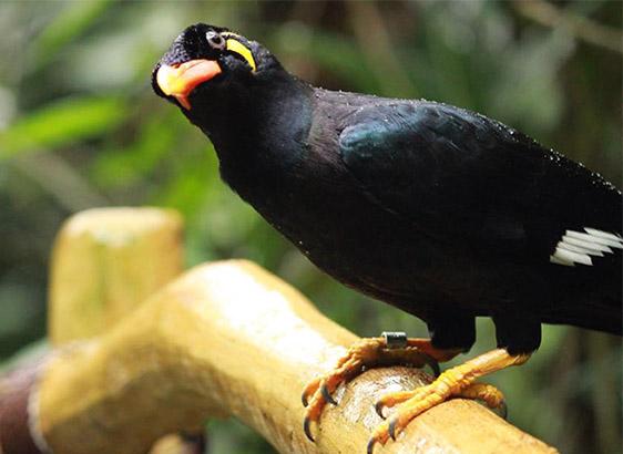 Nyambura.co - A Curious Bird