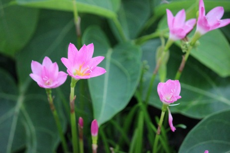 Nyambura.co - Lilies in Goa