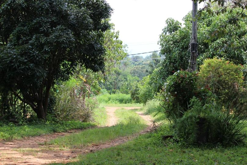 Nyambura.co - Rare Earth Farm