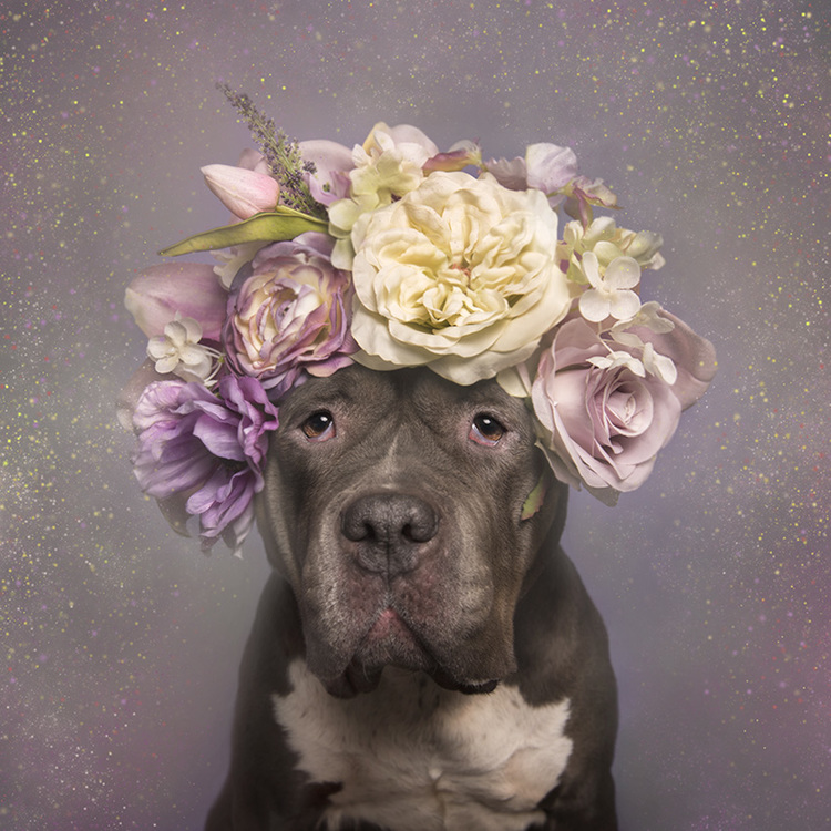 Nyambura.co - Flower Power Pitbulls